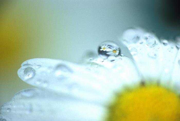 「ゆびきり」<br>キュートなはなかざり Pretty flower<br>よくばりなあまつぶが ふたつもはなをとりこにし はなかざりに へんしんマジック
