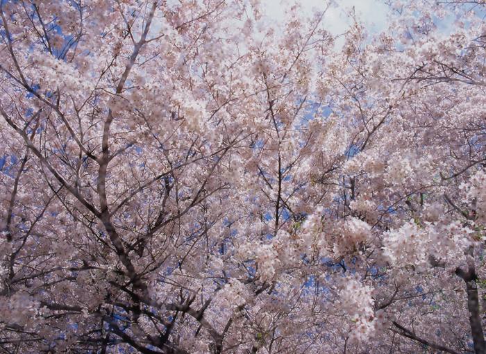 春陽声(東京)
