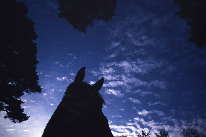 The horse in early light.