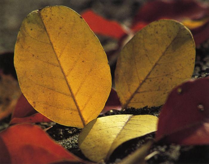 秋<br>涼風わたる彩りの秋。春を華やかと例えれば、秋はきらびやか…が似合う。綾なす彩りは、まさに錦、燃ゆる紅葉に心も燃える。<br>11月下旬晴