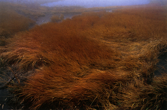 秋の湿原<br>八甲田山田茂萢・10月上旬雨