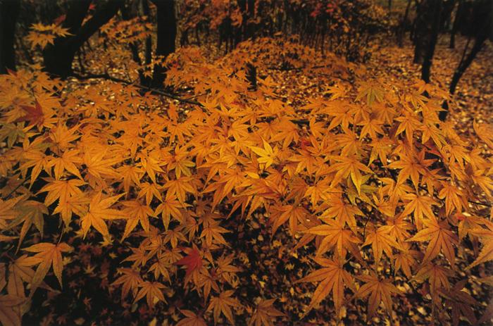木立の秋<br>万博自然公園(吹田市)・11月下旬曇