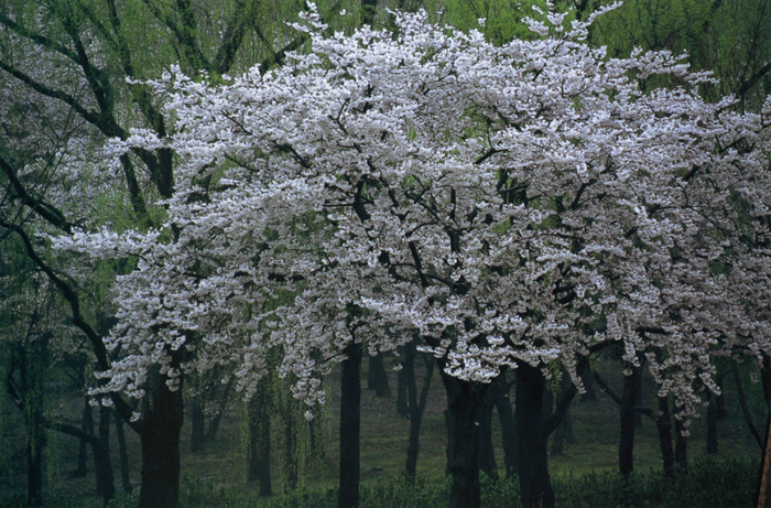 雨の日に<br>万博自然公園(吹田市)・4月上旬雨