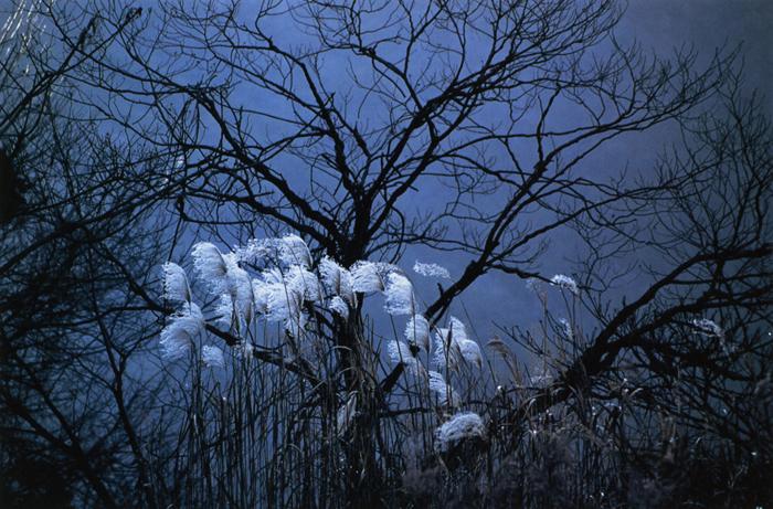 暮色<br>余呉湖畔(滋賀県)・12月下旬晴