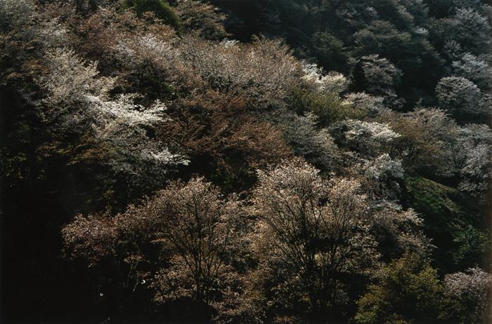春の山<br>吉野山(奈良県)・4月上?中旬晴