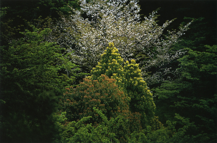 森の春<br>箕面国定公園(箕面市)・4月中?下旬晴