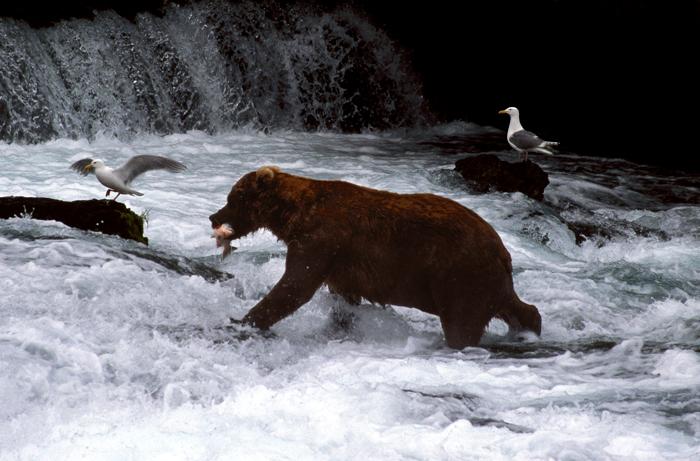 大自然の営み