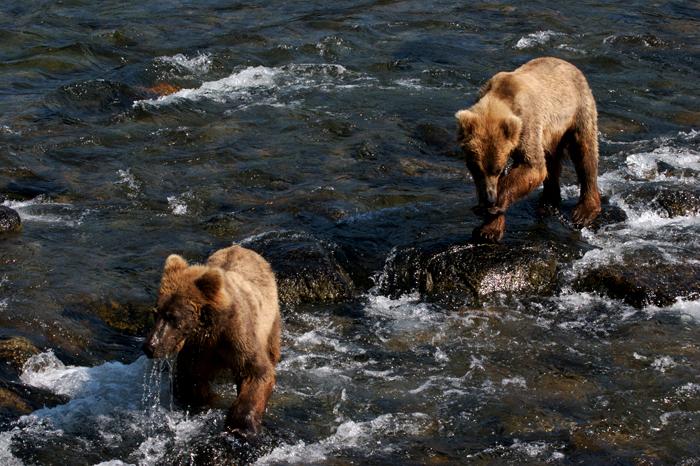 流れと小熊