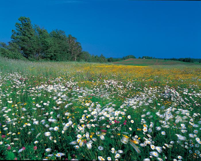 色の豊かな里は、花の甘い香りに満ちている