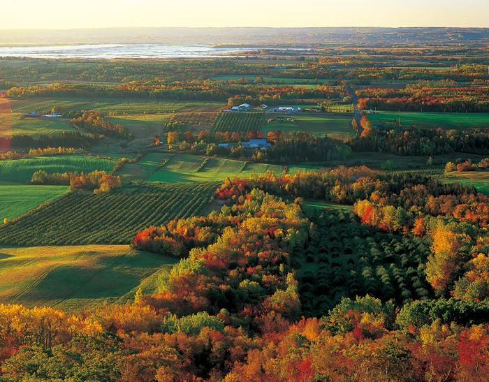 リンゴの里アナポリス・バレー。里の秋にたよりが届く頃、すべてのリンゴ園でまっ赤な実の摘みとりが始まる