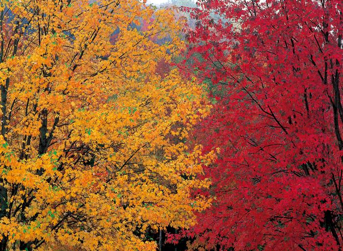 冷たい雨が木々の輝きをフッと落ち着かせてくれる(NB)