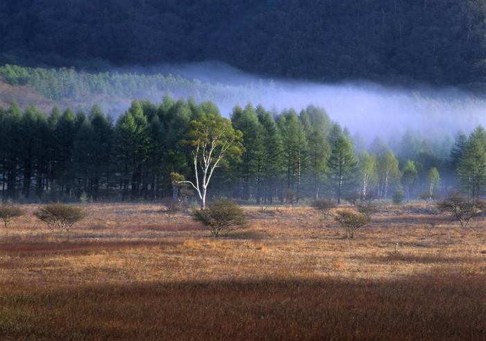 弓張峠<br>(栃木県日光市戦場ヶ原)<br>1431メートル)<br>小田代の湿原に「貴婦人」と呼ぶ樺の木立っている峠