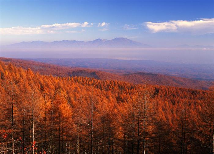 麦草峠<br>(長野県南佐久郡佐久穂町?茅野市)<br>(2127メートル)<br>八ッ岳の鞍部の峠でカラマツの大樹海が美しい。