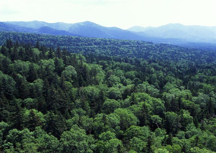 三国峠<br>(北海道上川郡上川町?上士幌町)<br>(1139メートル)<br>旧十勝国・石狩国・北見国の三国の境界にあることから三国峠と名づけられた。