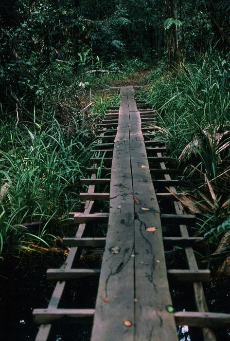 オランウータンの森へ<br>(タンジュンプティン)