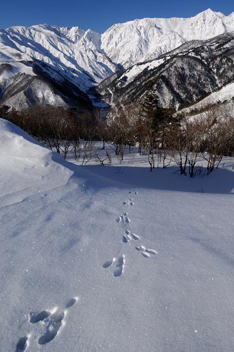 冬の散歩道?岩岳より厳冬の唐松岳・不帰