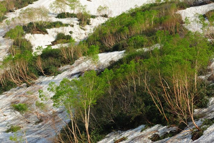 新緑萌える栂池