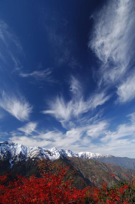 白馬岳秋景 ?ナナカマドの紅葉と新雪の白馬三山