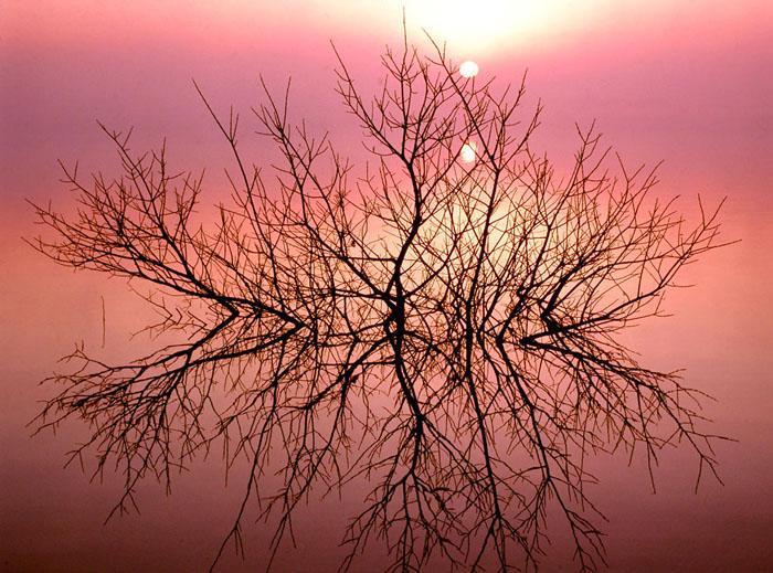 渡良瀬遊水地・谷中湖の朝です。霧で周辺の町並みが隠され、幻想的な光景に出会えました。