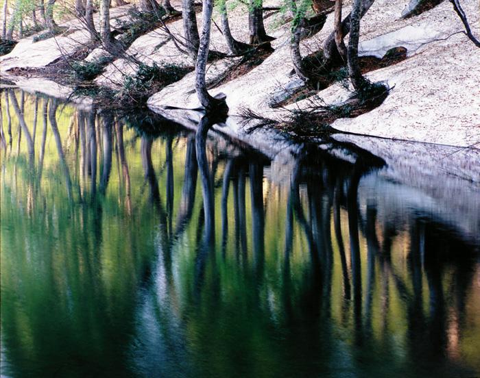 長野県・雨飾山麓の鎌池の朝です。5月中旬、遅い春を迎えたブナの新緑を水面の動きと共に表現してみました。