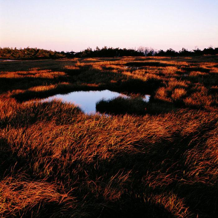 群馬県・苗場山は、日本で有数の山頂湿原として知られています。急な登山道を数時間の登った疲れを忘れさせてくれるくらいの草紅葉、池塘が印象的でした。