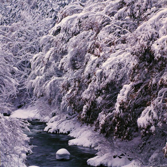 福島県・昭和村で、晩秋の紅葉に降雪した渓流に遭遇しました。雪が積もりすぎて、重々しい感じでしたが、これも自然のひとつの表情です。