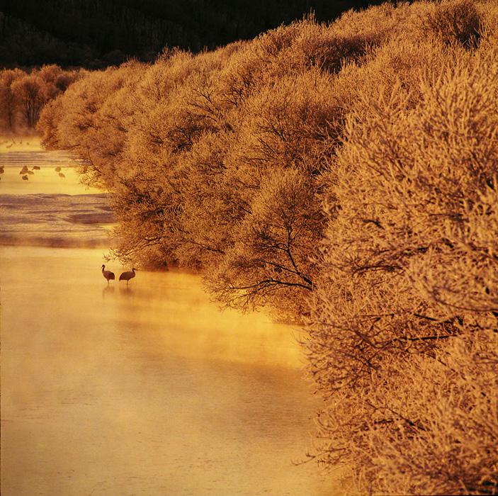 北海道・雪裡川の朝です。タンチョウの塒としても知られ、晴れた日の朝は酷寒です。 周囲の霧氷も、幻想的な光景を引き立ててくれました。