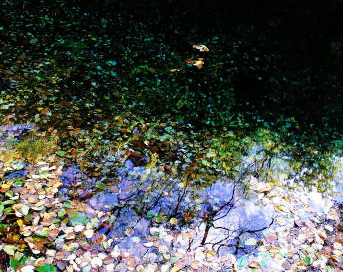 青森県・岩崎村の十二湖です。誰もいなくなった7月の夕暮れに、水底に堆積する落ち葉が、とても印象に残り撮影しました。