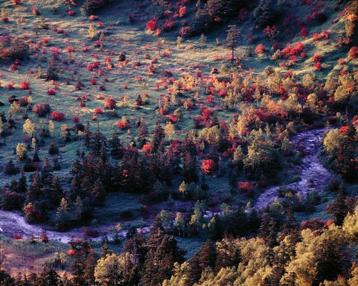 群馬県・芳ヶ平の朝です。ここ数年、素晴らしい紅葉に出会えません。絵にかいたような素晴らしい山岳風景が望める撮影地です。