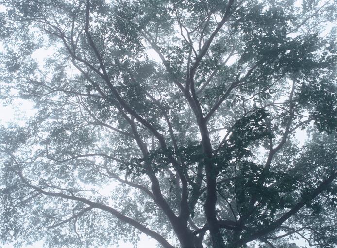 「樹芒」 小谷村 釜池