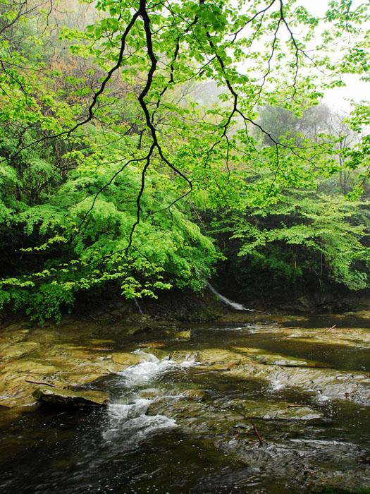 光鮮やか (千葉県、養老渓谷)