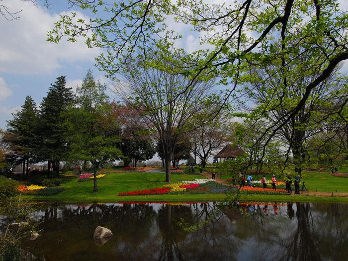五月晴れ (昭和記念公園)