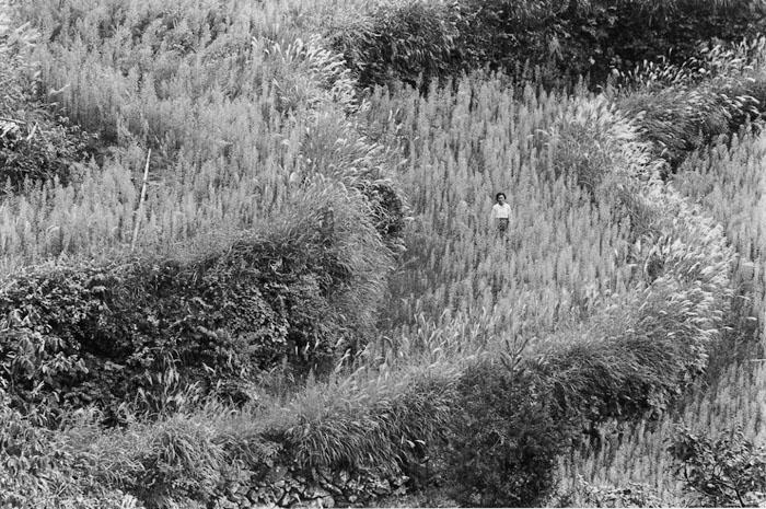 減反で耕作放棄された棚田 山口県錦町柱ヶ瀬 1970年