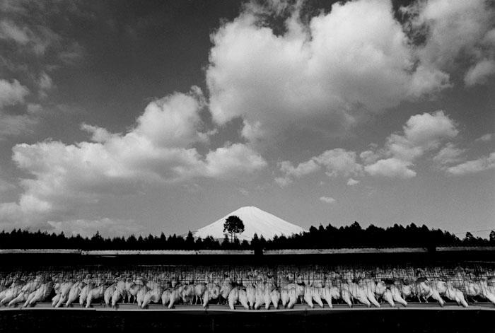 養鶏場 静岡県御殿場市板妻 1972年