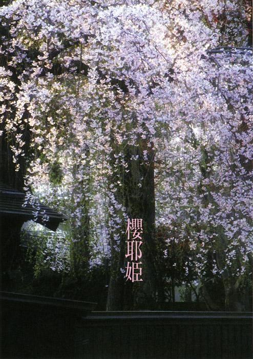 「好色四人女」より<br>春の夢 櫻耶姫 角館