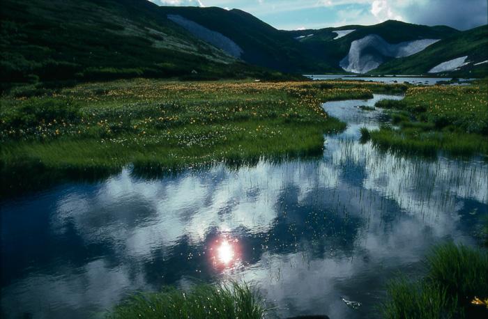 大雪山 ヒサゴ沼のエゾキスゲ